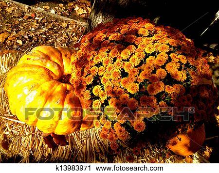 stock of mums and pumpkin