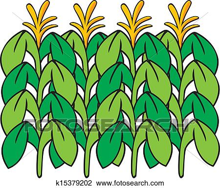 clipart of corn stalk k15379202