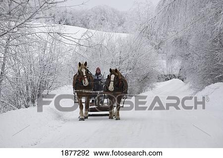 Cowansville. 魁北克. canada;. a. 馬 被畫. 雪橇騎. 透過. the. 雪 種類最齊全的圖像   1877292   Fotosearch