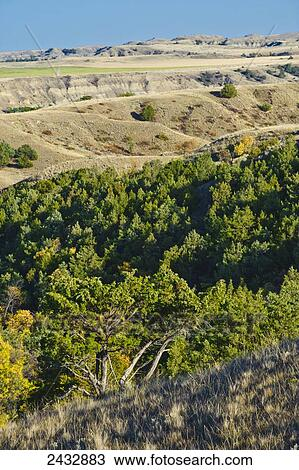 Canyon Of Junipers In The Little Missouri National