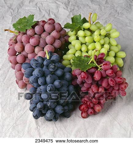 Agriculture - Arrangement of four varieties of table grapes: Autumn Royal black grapes, Red Globe, Thompson Seedless and Crimson Seedless (cw from ...