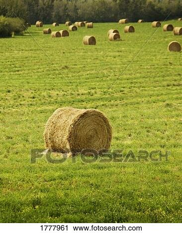 stock of bales hay