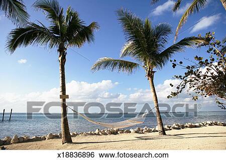 hammock between two palm