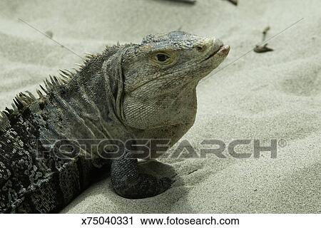 lizard standing on sand