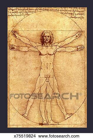 anatomy drawing by leonardo