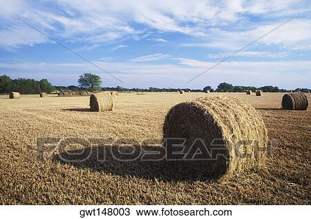 stock of hay bales in field
