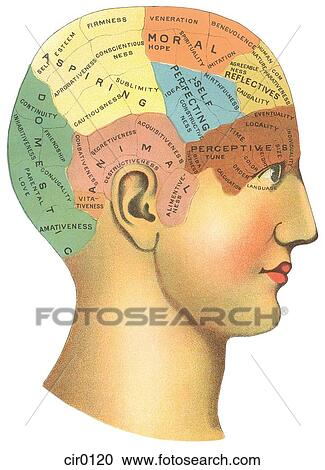 vintage diagram scout ii ignition wiring a of the different psychological areas in brain stock illustration fotosearch