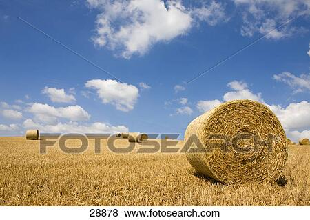 hay harvested
