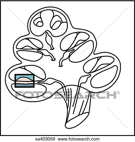 Stock Illustration of Orientation drawing of the spiral