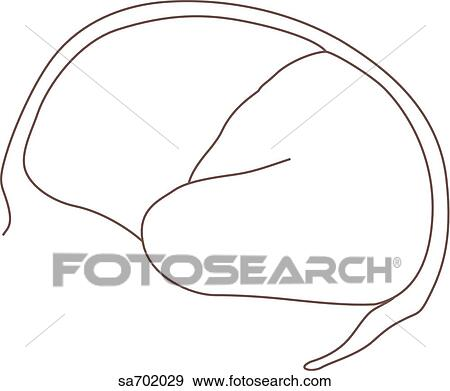Drawing Brain Closeup Stock Illustration Illustration Of