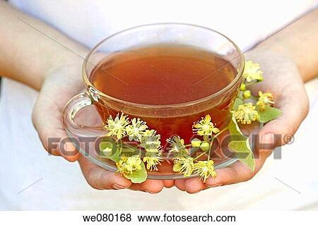 linden flower tea tilia