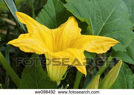 stock of star shaped yellow