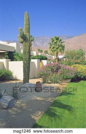 stock of residential desert