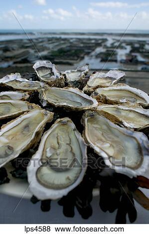 Immagini  ostrica piatto da portata e fattoria