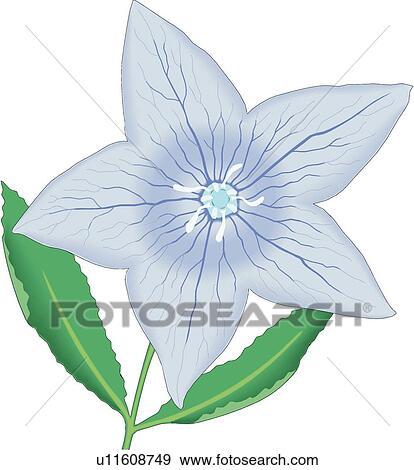 balloon flower clip art u11608749
