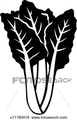 Clip Art Of Food Produce Swiss Chard Vegetable U11783419 Search Clipart Illustration