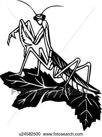 clipart of bugs insect praying
