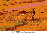 Stock Illustrations of two monochrome deer u13916390 ...