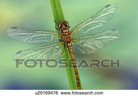 close- dragonfly