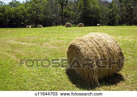 stock of hay bale in farm