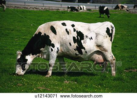 Domestic Animals Animals Farm Animal Farm Farm Domestic Animal Animal Stock Image U12143071 Fotosearch