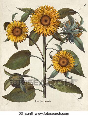 drawing of antique floral illustration