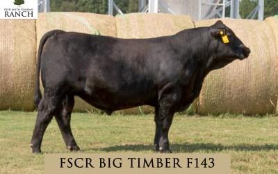 FSCR BIG TIMBER F143 in the Fall Sale!