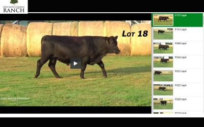 Video of Fall Sale Cattle!