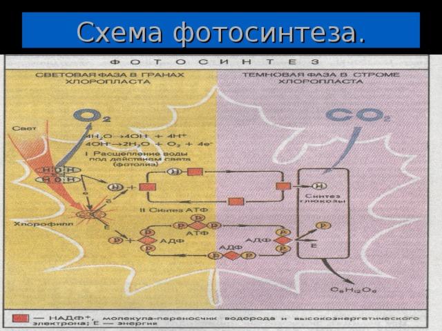 enzime de ardere a grăsimilor metabolism