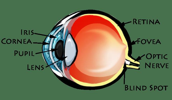 human eye diagram blind spot third brake light wiring blog archives enya s basics of the