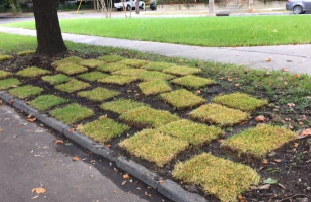 Desoto Place Gets Donation of Sod