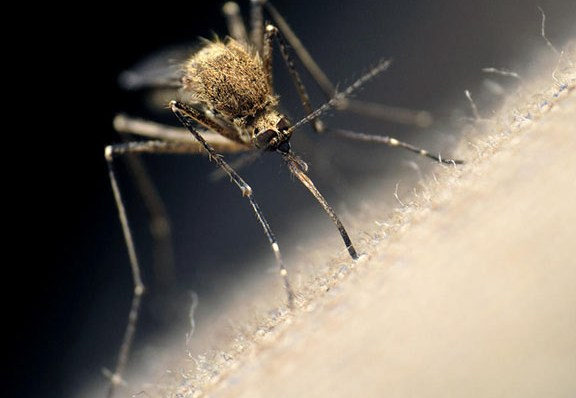 New Orleans Health Department wants to Help You Fight Mosquito-borne Diseases
