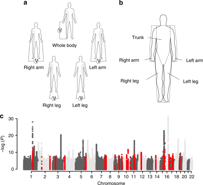genome wide association study of body fat distribution identifies adiposity loci and sex specific [ 1300 x 1186 Pixel ]