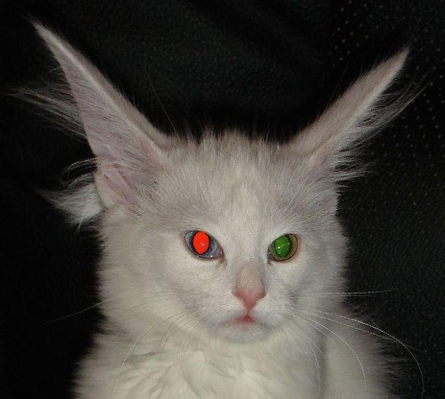 why cat eyes look