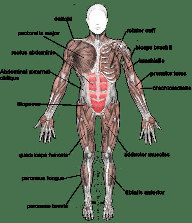 hight resolution of rafael nadal hip strain