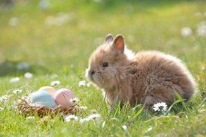 easter, easter bunny, egg