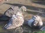 Group bath