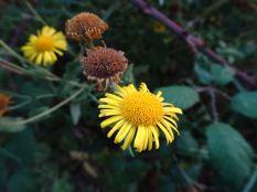 Unknown autumn flower