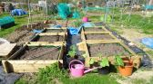 Allotment today