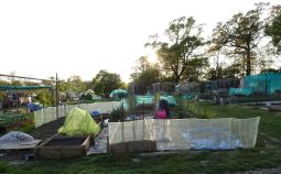 Allotment evening