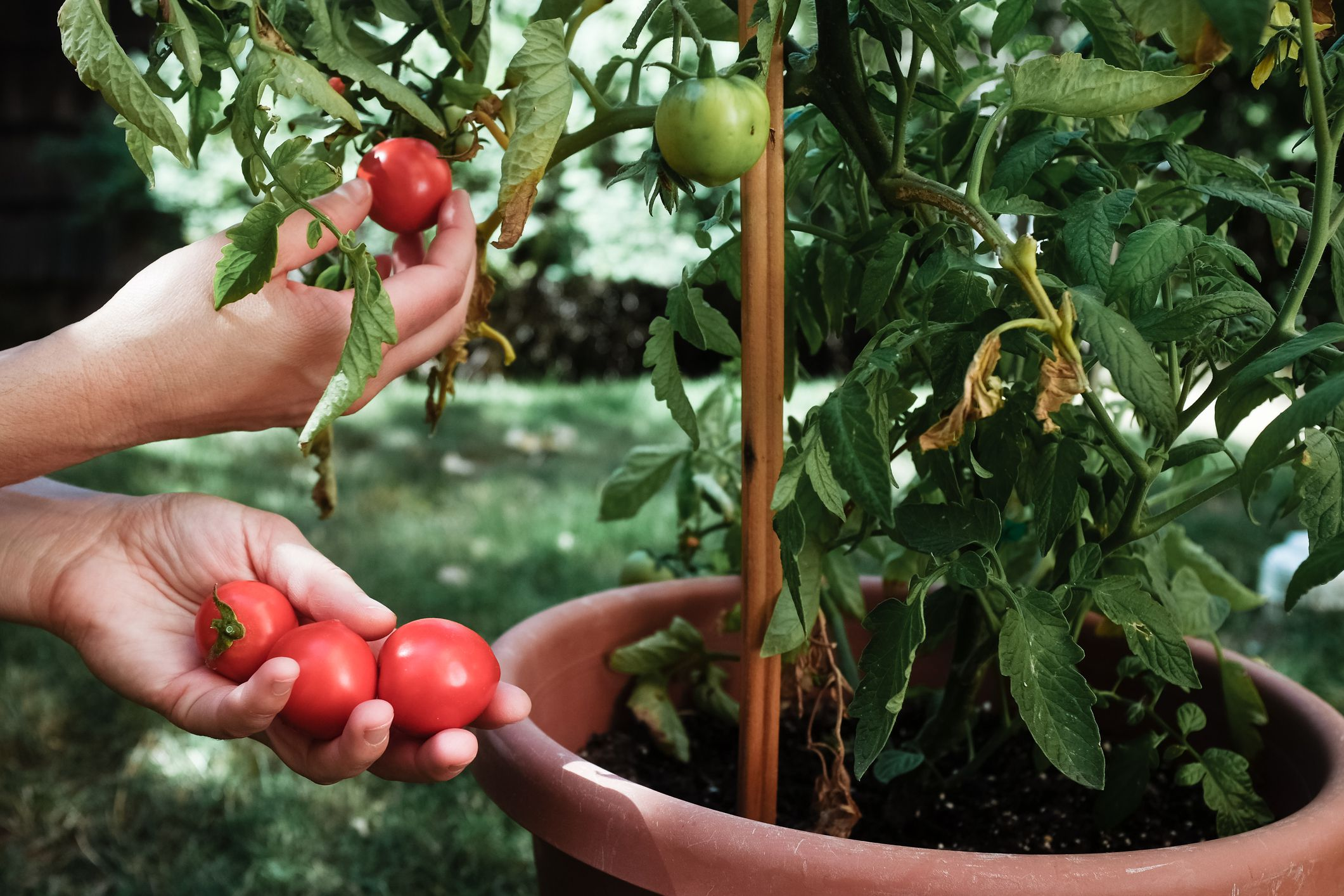Warm Climate Container Vegetable Gardening