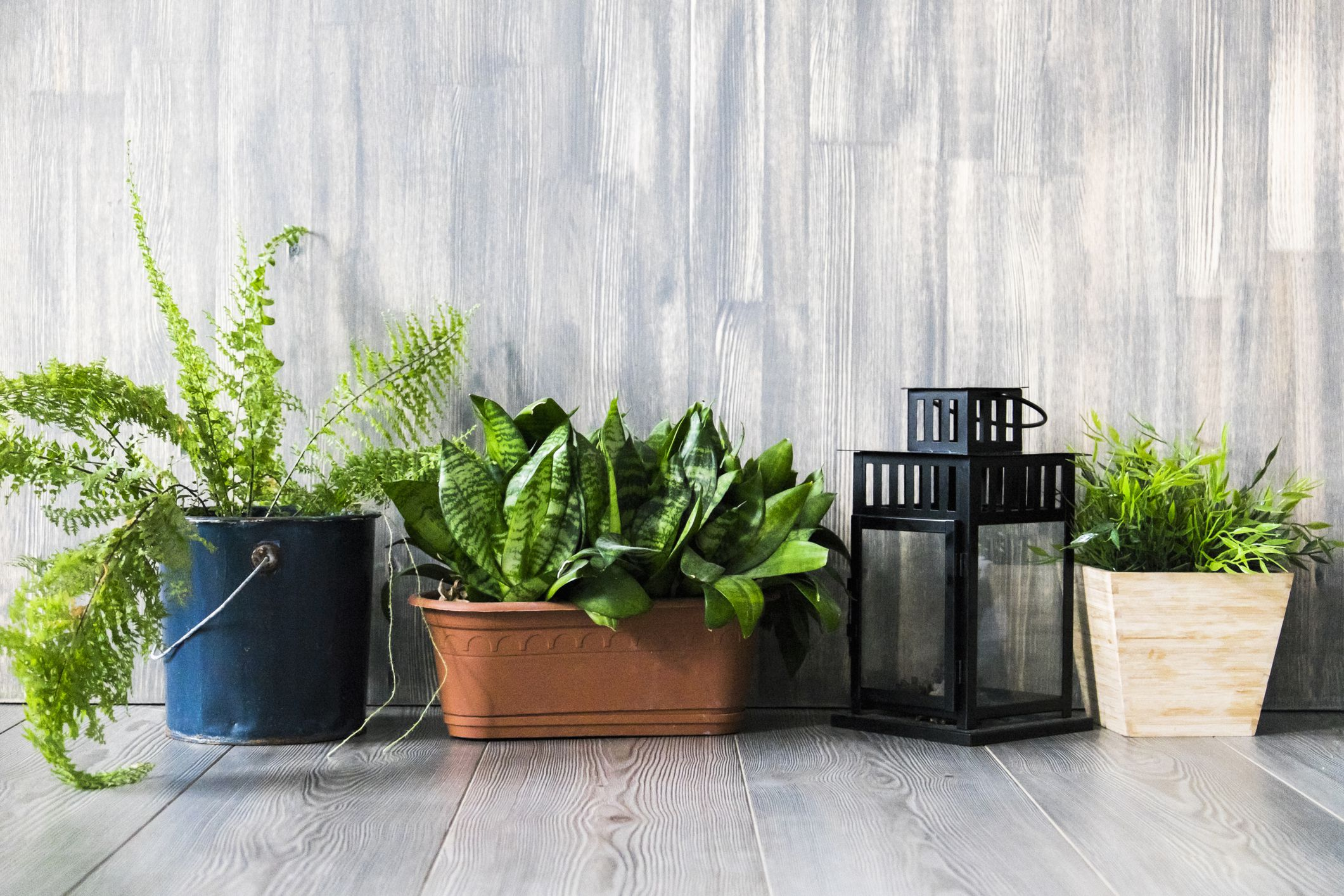 How To Overwinter Annual Plants Indoors