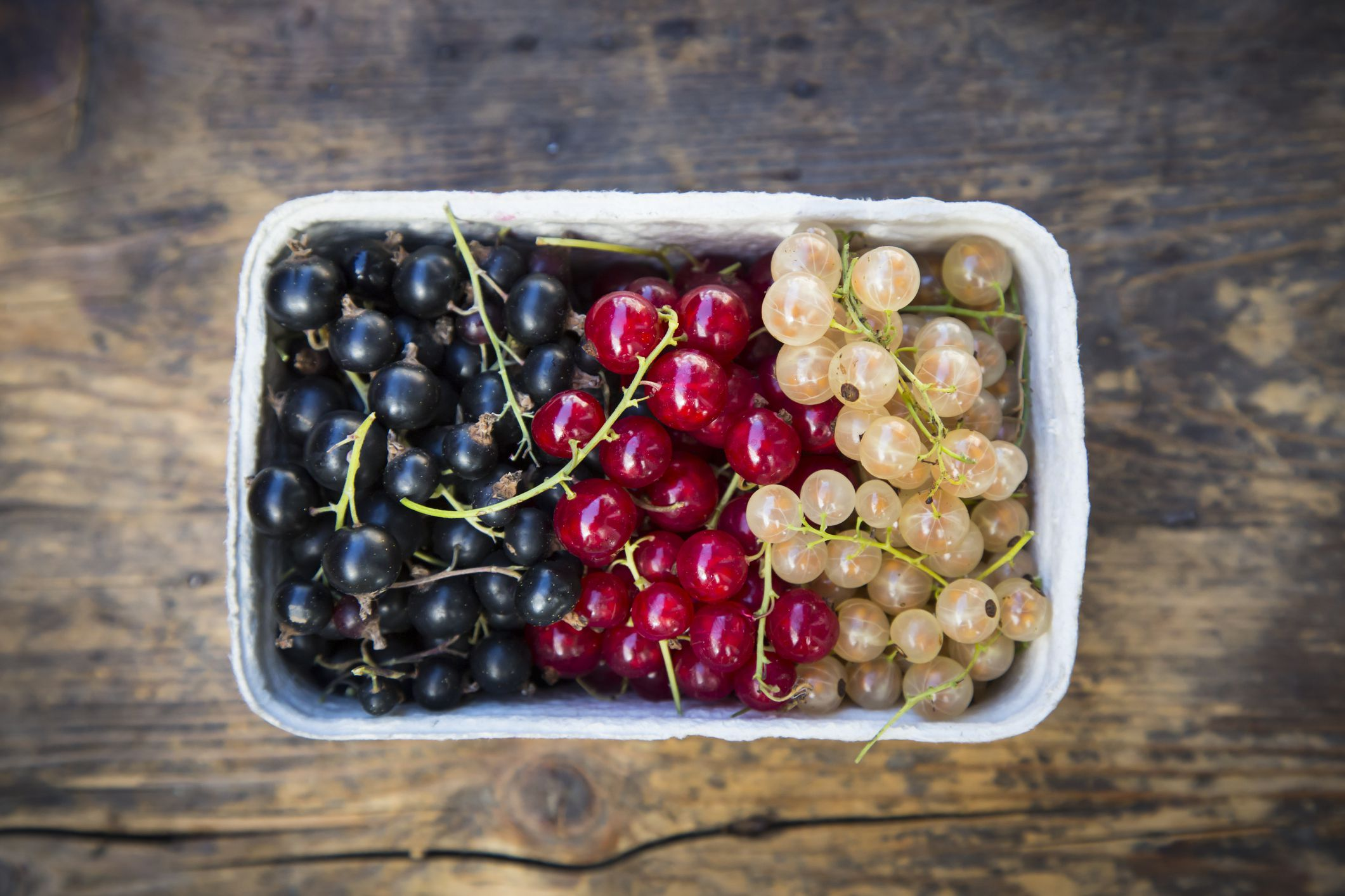 What Are Currants  Red and Black Currants
