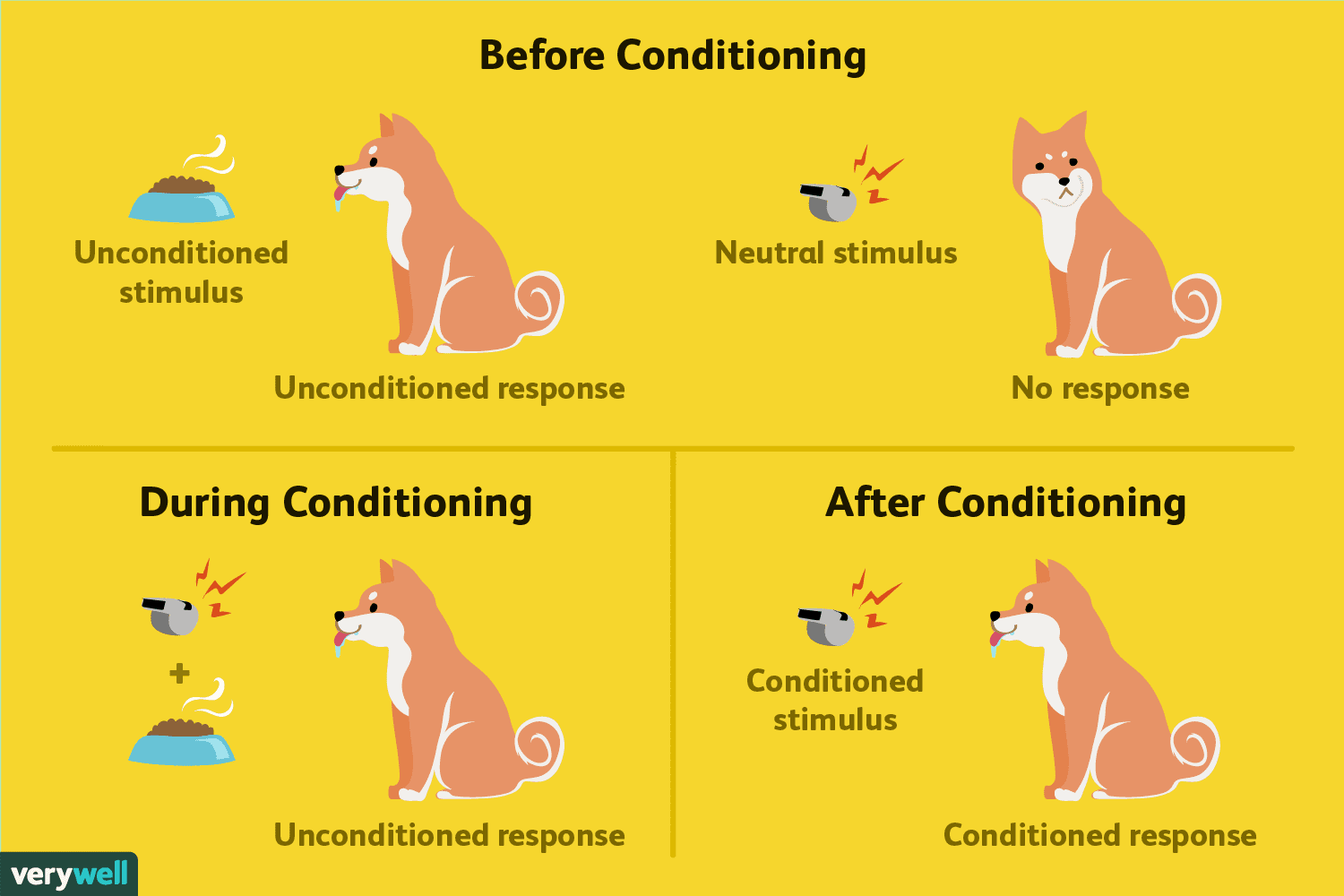 Classical Conditioning How It Works With Examples