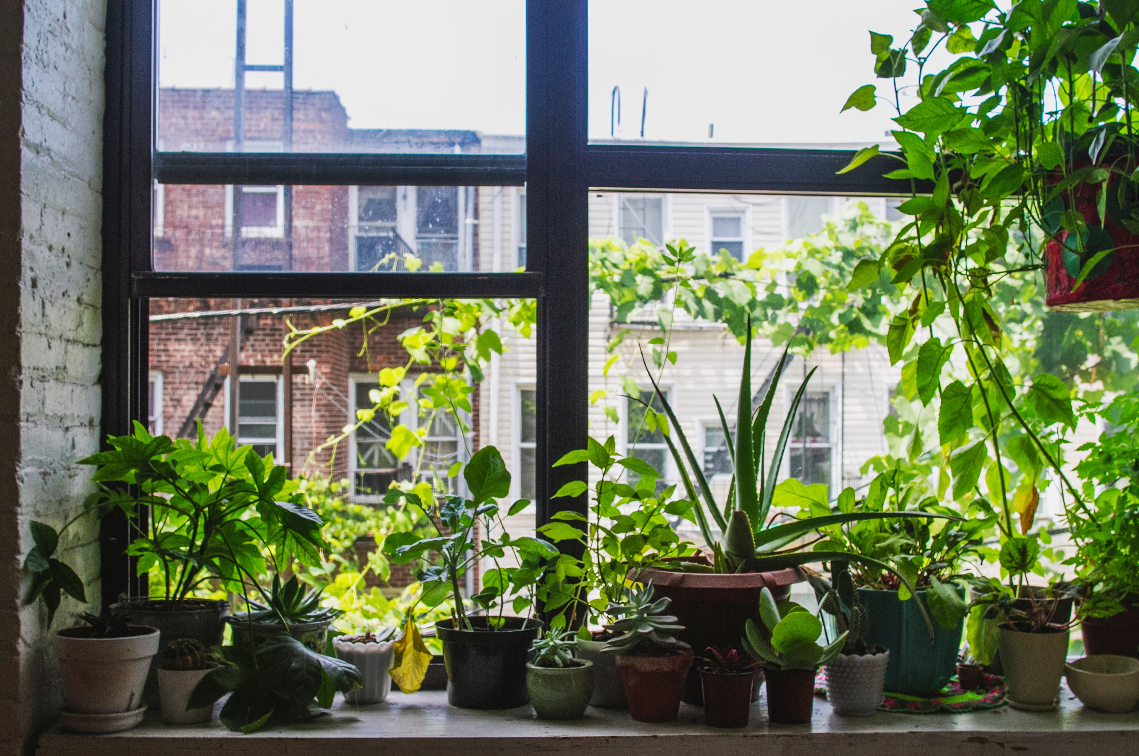 How to Use Plants as Feng Shui Cures