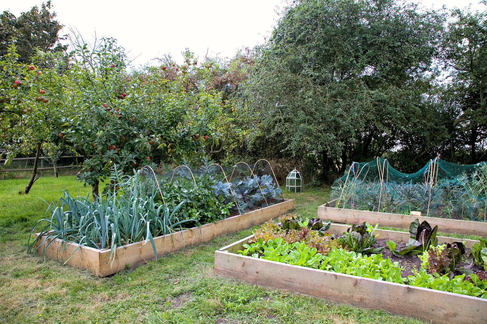 Tips for Building a LowMaintenance Raised Bed