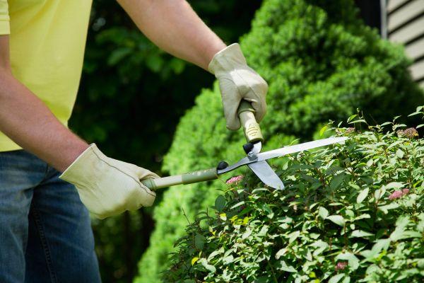 landscaping errors avoid