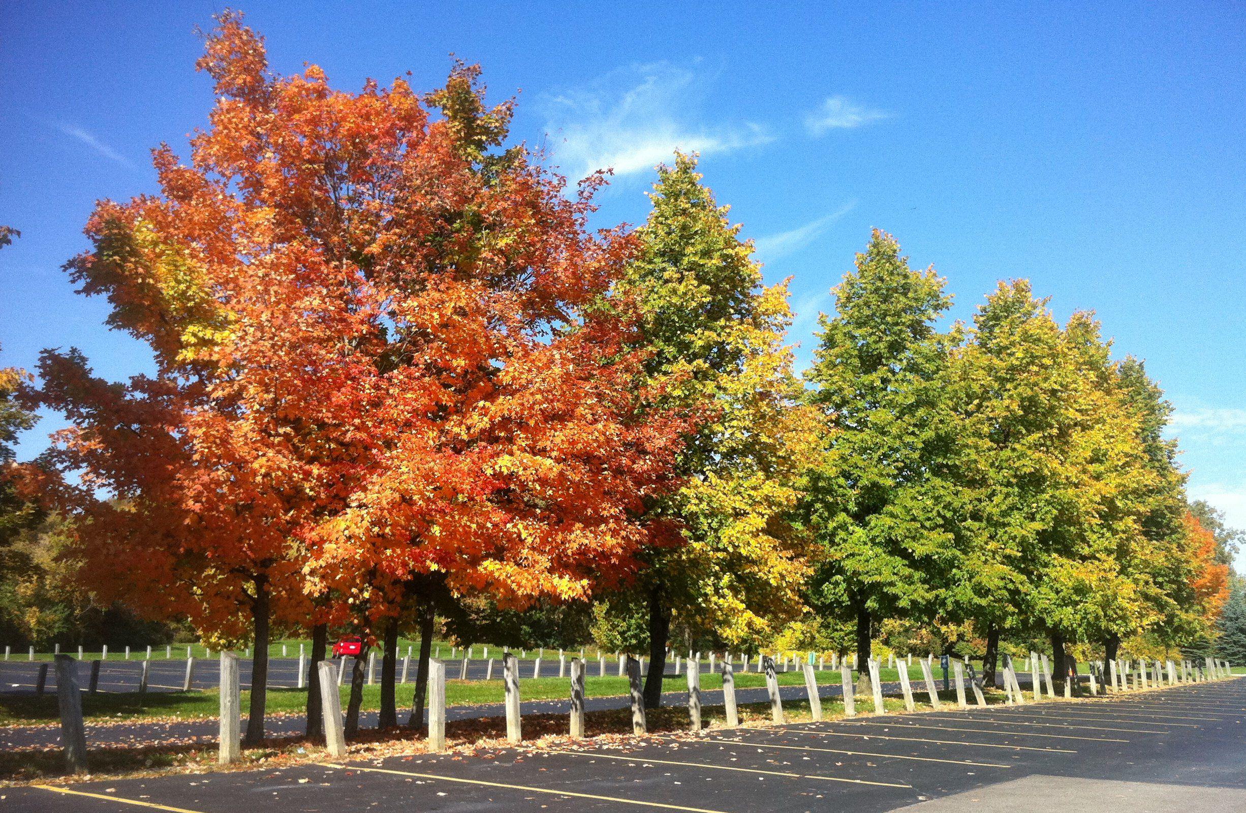 Maine Fall Foliage Wallpaper Fall Foliage Tours In Michigan