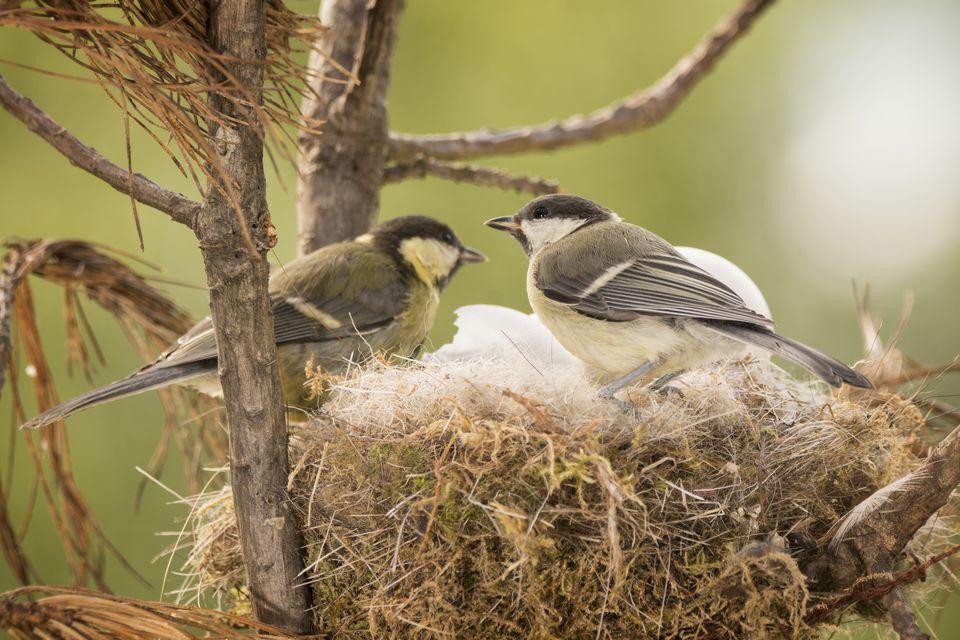 Bird Nest Identification