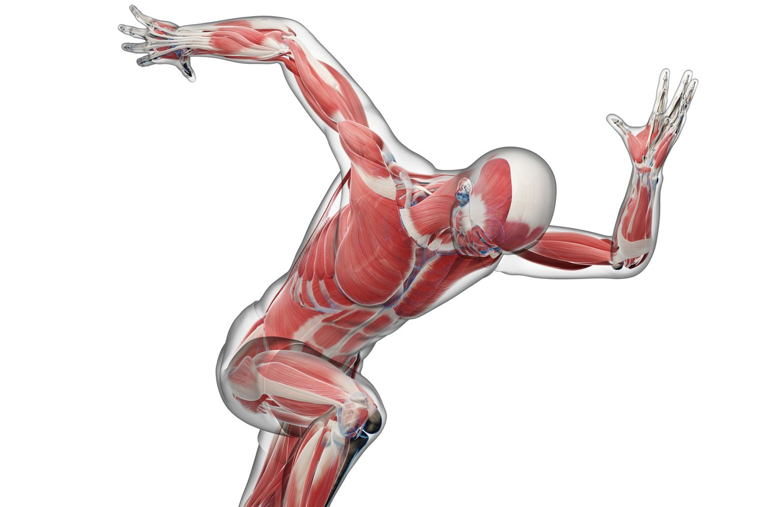 Biomechanics Overview And Applications